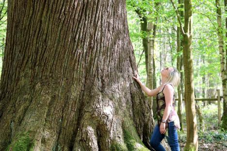 Forêt le nouvion