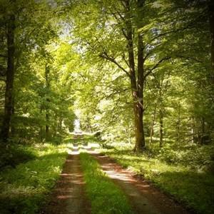 forêts de thiérache